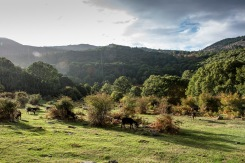 20121012-181147-Castañar-del-Tiemblo