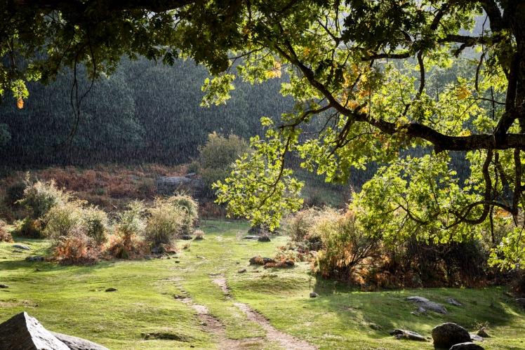 20121012-181539-Castañar-del-Tiemblo